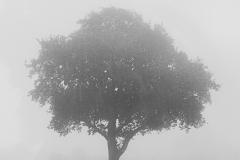 Tiptree