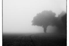 Tree Tiptree